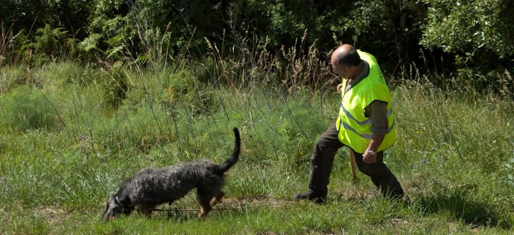 Adiestraminto de perros en Finca Novales, Burgos.